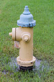 Flooded Fire hydrant with a grass background Royalty Free Stock Photo