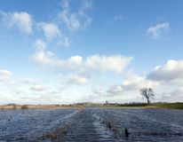 Flood plains of river ijssel near Zalk between Kampen and Zwolle in the netherlands. Flooded flood plains of river ijssel near Zalk between Kampen and Zwolle in Royalty Free Stock Image