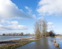 Flood plains of river ijssel near Zalk between Kampen and Zwolle in the netherlands. Flooded flood plains of river ijssel near Zalk between Kampen and Zwolle in Stock Image