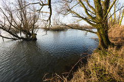 Flooded floodplain of a major river in the Netherlands Stock Photos