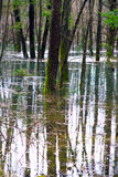 Flooded Forest Royalty Free Stock Images
