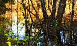 Flooded Forest. Trees in water after flood in spring forest Stock Image