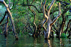 Flooded forest Royalty Free Stock Photo