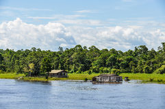 Flooded forest on the Amazon River, Brazil Royalty Free Stock Photography