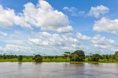 Flooded forest on the Amazon River, Brazil Stock Images