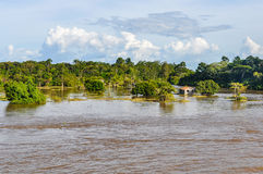 Flooded forest on the Amazon River, Brazil Royalty Free Stock Photos