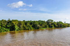 Flooded forest on the Amazon River, Brazil Stock Photo