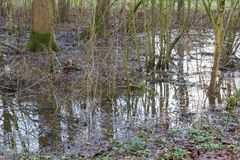 Flooded forest area as a natural and recurring seasonal occurren Royalty Free Stock Photos