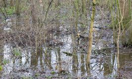 Flooded forest area as a natural and recurring seasonal occurren. Ce - The Netherlands Stock Photography