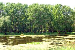 Flooded forest in danube delta Stock Photography
