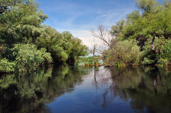 Flooded forest in the Danube delta Royalty Free Stock Photo