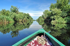 Flooded forest in Danube delta Stock Image