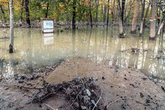 Flooded forest. Flood - The park of Monza covered by more than one meter of water stock photography