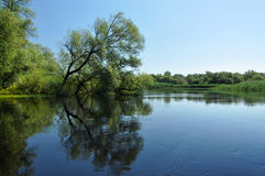 Flooded Forest In The Danube Delta Royalty Free Stock Images