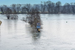 Flooded forest land, flood plain Royalty Free Stock Photos