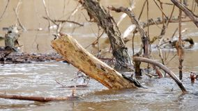 A flooded forest landscape with marsh and dead trees. Spring flood in the river. Water burst its banks flooded forest. Spring rain stock video footage