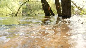 A flooded forest landscape with marsh and dead trees. Spring flood in the river. Water burst its banks flooded forest. Spring rain stock footage