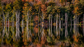 Flooded forest in Long Pond Ironworks State Park, NJ Stock Photo