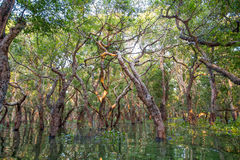 Flooded forest Stock Photos