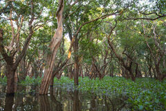 Flooded forest Stock Images