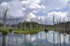Flooded forest of the Nam Theun 2 reservoir on the Nakai Plateau in Laos stock photos