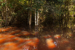 Flooded forest Royalty Free Stock Photos