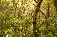 Flooded forest, Tonle Sap Lake, Cambodia Stock Image