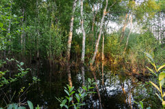 Flooded forest trees sunset reflections on water Stock Photo