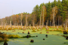 The flooded forest Royalty Free Stock Photos