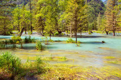 Flooded forest wild river Royalty Free Stock Images