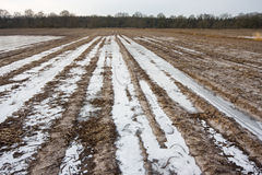 Flooded and frozen potato field. Stock Photos