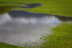Flooded grass Royalty Free Stock Photography