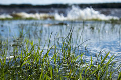 Flooded Grass Royalty Free Stock Photos