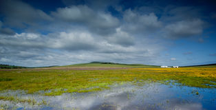 Flooded green fields Stock Images