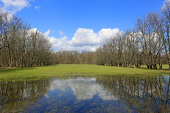 Flooded green meadow Stock Image