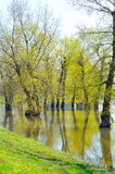Flooded ground Royalty Free Stock Images