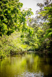 Flooded jungle at amazon river Royalty Free Stock Images