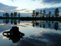The flooded in the lake stump on the sunset. Stock Image