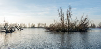 Flooded land with bare trees early in the morning Stock Photography