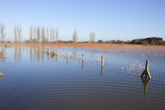 Flooded landscape Stock Image