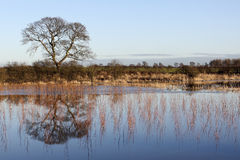 Flooded landscape Royalty Free Stock Photos