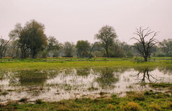 Flooded landscape ofpools and trees Stock Photo