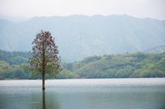 Free Flooded Lonely Tree Landscape At Springtime. Smooth Water. Royalty Free Stock Images - 103349749