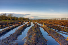 Flooded maize field Stock Photography
