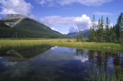 Flooded meadow in Canadian Rockies Stock Photo