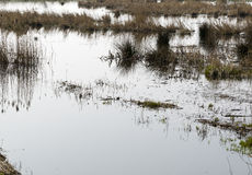 Flooded meadow. Caused by extreme rain fall. Theme: climate change Royalty Free Stock Images