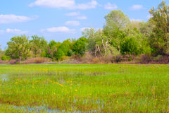 Flooded meadow Royalty Free Stock Images