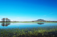 Flooded meadow at Lake Balaton,Hungary Stock Images