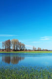 Flooded meadow at Lake Balaton,Hungary Royalty Free Stock Photos
