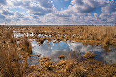 Flooded meadows in early spring. Landscape flooded meadows in early spring in nice sunny day. Ukraine royalty free stock photo